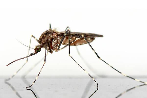services-mosquito-eka